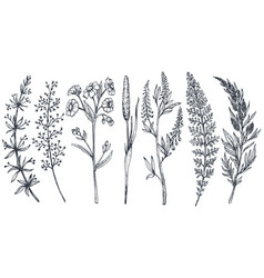 hand drawn wildflowers and herbs set vector image vector image
