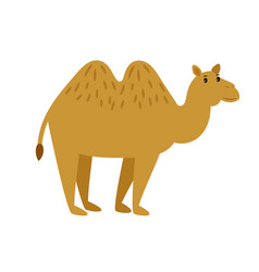 Camel cartoon caravan camel character on vector