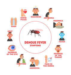 dengue fever symptoms information banner template vector image