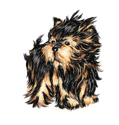 yorkshire terrier puppy vector image vector image