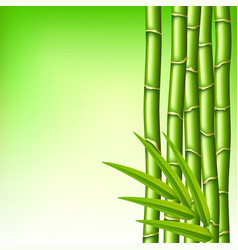 Bamboo branches on green background vector