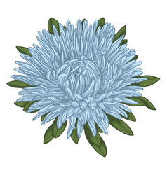 Beautiful blue aster isolated on white background vector