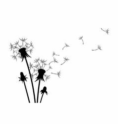 Flower of field dandelion vector