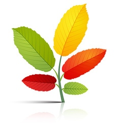 Abstract Plant with Colorful Leaves on White vector image