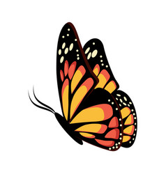 beautiful yellow and orange sitting or flying vector image