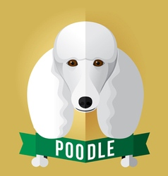 poodle vector image