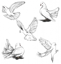 doves silhouette vector image