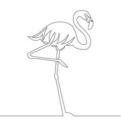 flamingo continuous line drawing vector image