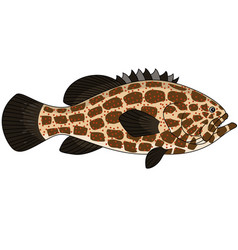 Grouper fish vector image