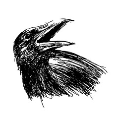 Hand sketch head crow vector image
