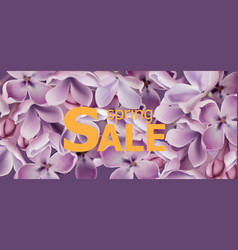 purple lilac flowers spring background vector image