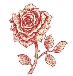 vintage rose vector image