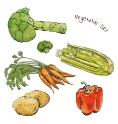 Watercolor vegetable sketches set with ink contour vector