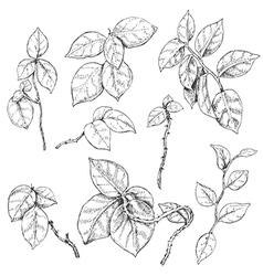 doodle liana vector image vector image