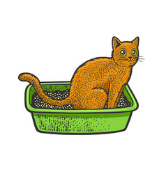 cat sit on litter sketch vector image