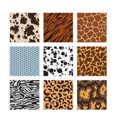 animals skin pattern zoo seamless backgrounds vector image