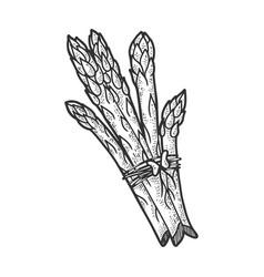 Asparagus plant sketch vector