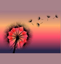 Dandelion flower in black and red against back vector