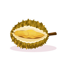 detailed flat design of open durian fresh vector image
