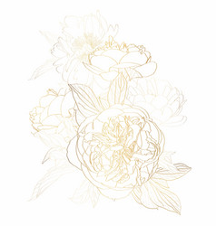 Peonies golden outline bouquet on white background vector