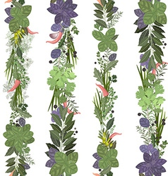seamless border of collection herbs and spices vector image