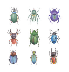 Set watercolor carabus trypocopris on white vector