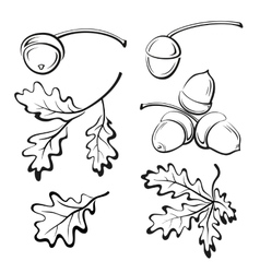 Oak Leaves and Acorns Pictograms vector image