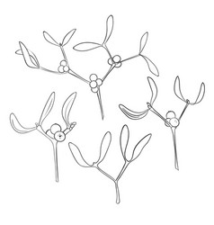 Set of four branch of hand drawn mistletoe in vector