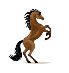 Beautiful horse standing vector