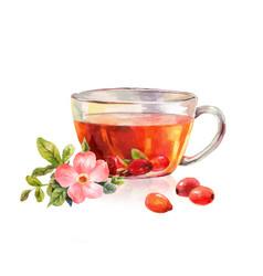 Glass mug of herbal tea drink rosehip tea vector