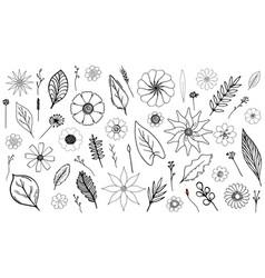 monochrome botanical set vector image