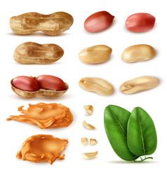 Peanut beans realistic set vector