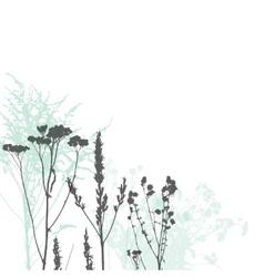 Wild herbs vector
