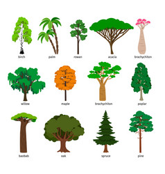 trees forest tree set with titles birch vector image