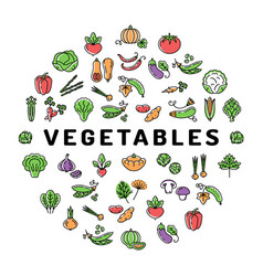 vegetable icon circle infographics colorful banner vector image vector image