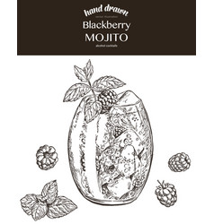 blackberry mojito sketch vector image