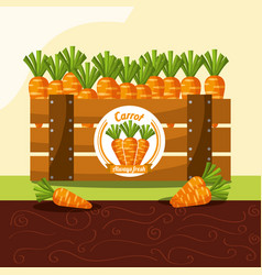 carrot vegetable always fresh in wood basket vector image