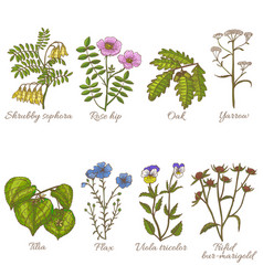 set of medicinal plants in hand-drawn style vector image