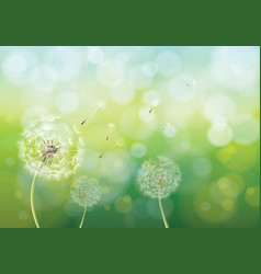 Spring background with dandelions vector