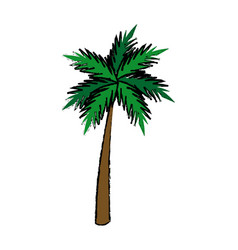 Green palm tree tropical natural botanic vector