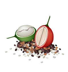 Ripe and Unripe Coffee Berries with Coffee Beans vector