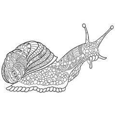 Snail coloring page vector