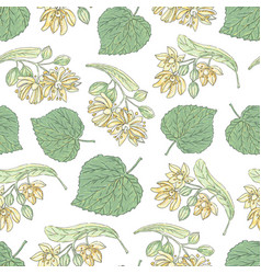 Tilia flowers 5 vector
