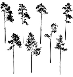 set of pine trees vector image
