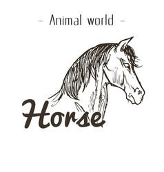 animal world horse hand draw background ima vector image