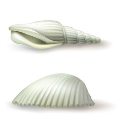 badges stickers seashell in vector image