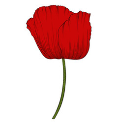 red poppy in a hand-drawn graphic style isolated vector image