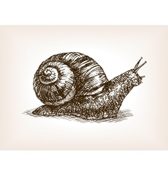 Snail hand drawn sketch vector