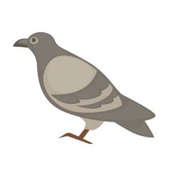 pigeon cartoon bird isolated vector image