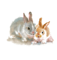 two cute rabbits on white background watercolor vector image